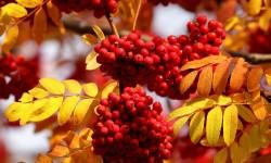 Осенний уход